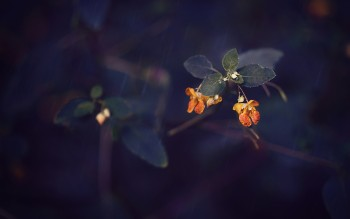 Bloom in Adversity